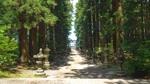 masajiro